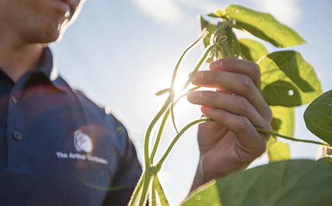 Man Examining Plant